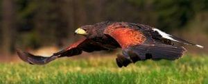 ne falconry slider