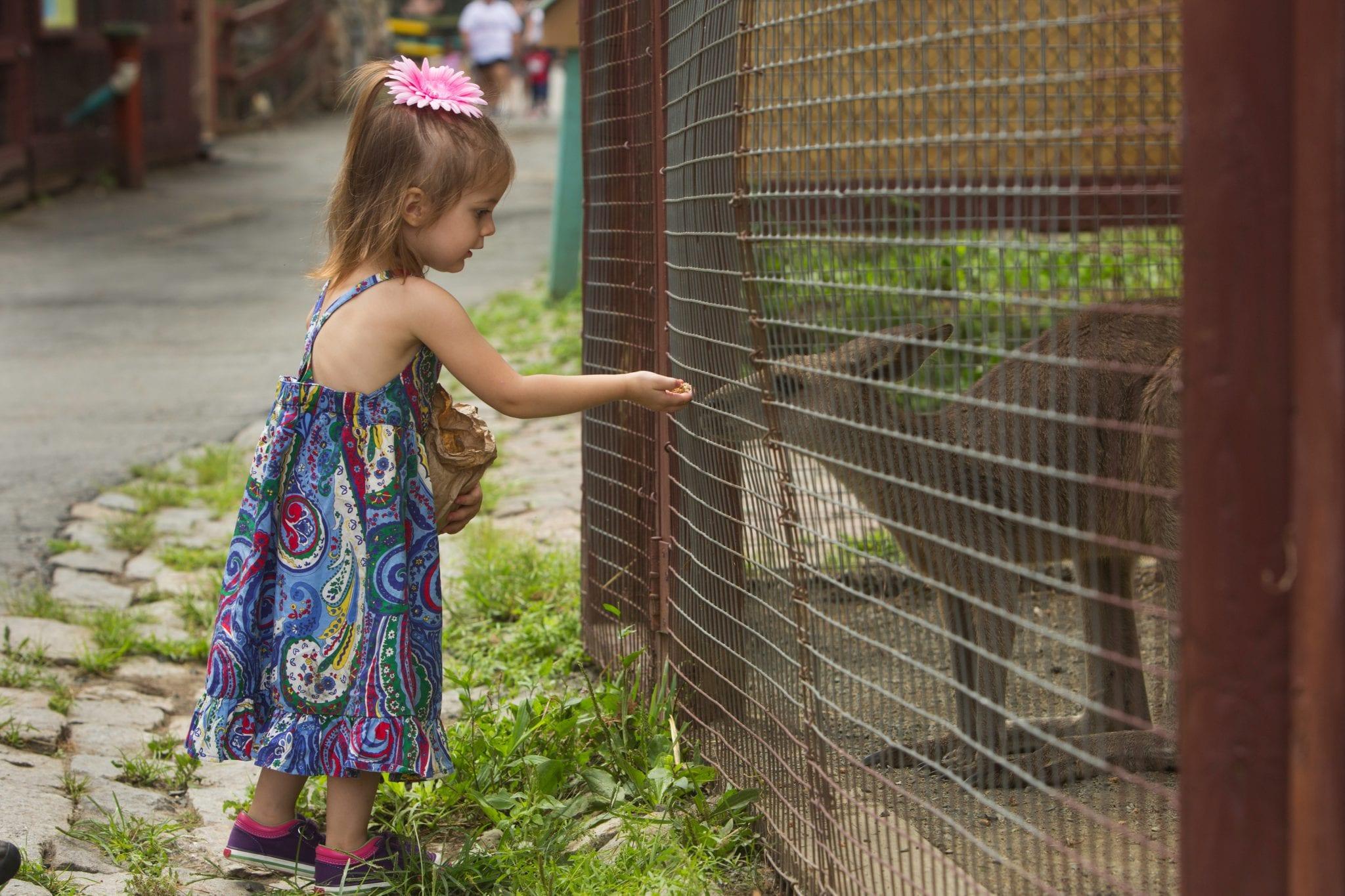 lupa-zoo-explorewesternmass.com