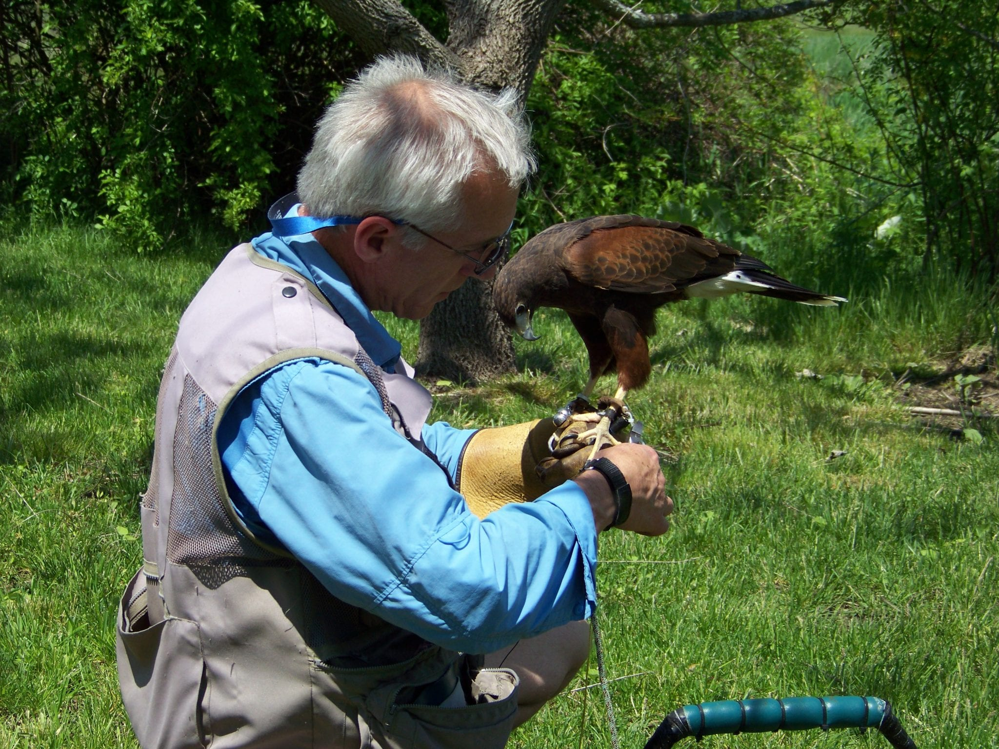 new-england-falconry-explorewesternmass.com