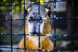 lupa zoo