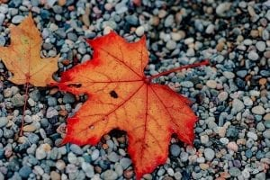 fall leaf october blog featured image